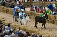 El comienzo de la trufa justa en Alba (Cuneo), se ha celebrado por más de 50 años, la raza del burro Fotografía de archivo libre de regalías