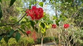 El comienzo del verano trae belleza a las flores fotografía de archivo libre de regalías