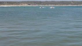El competir con de barcos de goma del pato hacia el espectador metrajes