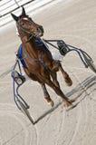 El competir con de harness Fotografía de archivo