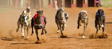 El competir con de perro Fotos de archivo