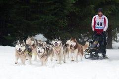 El competir con de perro de trineo, Donovaly, Eslovaquia Imagen de archivo libre de regalías