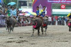 El competir con del búfalo Fotografía de archivo