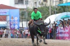 El competir con del búfalo Imagenes de archivo