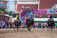 El competir con del búfalo del festival Fotos de archivo libres de regalías