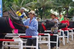 El competir con del búfalo del festival Imagen de archivo libre de regalías