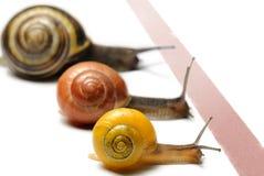 El competir con del caracol Fotografía de archivo libre de regalías