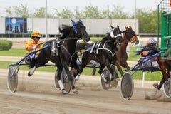 El competir con del italiano del caballo Imagen de archivo