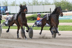 El competir con del italiano del caballo Fotos de archivo