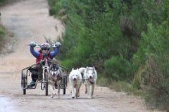 El competir con del trineo del perro Imagen de archivo libre de regalías
