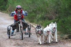 El competir con del trineo del perro Imágenes de archivo libres de regalías