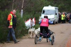 El competir con del trineo del perro Fotografía de archivo libre de regalías