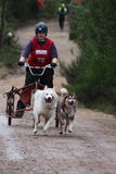 El competir con del trineo del perro Fotos de archivo libres de regalías