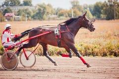 El competir con para las razas el trotar de los caballos Fotos de archivo libres de regalías