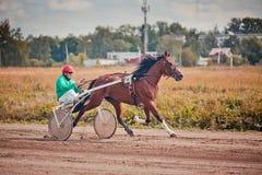 El competir con para las razas el trotar de los caballos Fotografía de archivo
