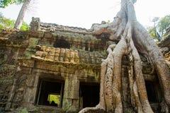 El complejo del templo de Angkor Fotografía de archivo