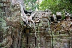 El complejo del templo de Angkor Fotos de archivo libres de regalías