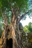 El complejo del templo de Angkor Imagen de archivo libre de regalías