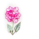El componer floral con la flor rosada con las hojas verdes en blanco Imágenes de archivo libres de regalías