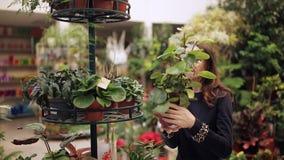 El comprador en la floristería considera houseplants en potes Una mujer quiere comprar una flor en un pote metrajes