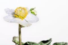 El concepto de belleza macra de flores Fotografía de archivo libre de regalías