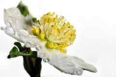 El concepto de belleza macra de flores II Foto de archivo