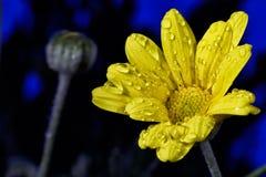 El concepto de belleza macra de flores III Fotos de archivo
