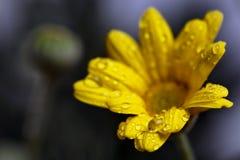 El concepto de belleza macra de flores V Fotos de archivo libres de regalías