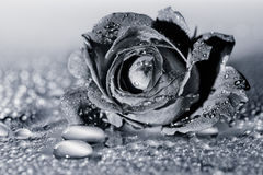 El concepto de belleza macra de flores VI Fotos de archivo libres de regalías