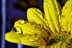 El concepto de belleza macra de flores VIII Fotografía de archivo libre de regalías