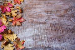 El concepto de la acción de gracias con la bellota y la caída se va en backg de madera Fotos de archivo