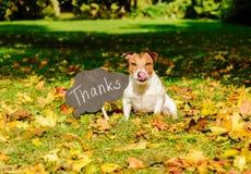 El concepto de la acción de gracias con el perro el caída se va y la placa con el ` agradece palabra del ` en ella Foto de archivo
