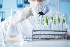 El concepto de la biotecnología con el científico en laboratorio imagen de archivo libre de regalías