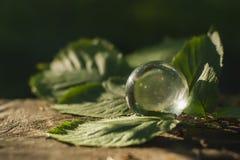 El concepto de la naturaleza, bola de cristal verde del bosque en un st de madera Fotos de archivo