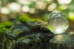 El concepto de la naturaleza, bola de cristal verde del bosque en un st de madera Fotografía de archivo