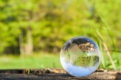 El concepto de la naturaleza, bola de cristal verde del bosque en un tocón de madera con las hojas Imagen de archivo