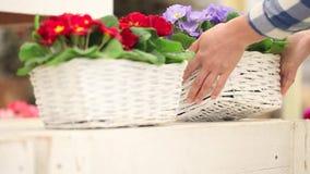 El concepto de la primavera del jardín, mujer del florista da el trabajo con las flores de cesta de mimbre blancas almacen de video