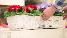 El concepto de la primavera del jardín, mujer del florista da el trabajo con las flores de cesta de mimbre blancas almacen de metraje de vídeo