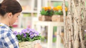 El concepto de la primavera del jardín, prímula de trabajo del florista de la mujer florece almacen de video