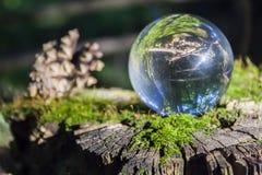 El concepto de naturaleza, bosque verde Fotografía de archivo