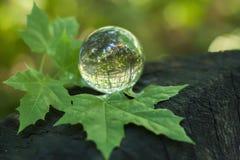 El concepto de naturaleza, bosque verde Fotografía de archivo libre de regalías