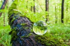 El concepto de naturaleza, bosque verde Fotos de archivo libres de regalías