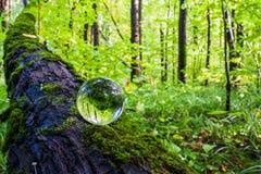 El concepto de naturaleza, bosque verde Imagen de archivo libre de regalías