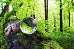 El concepto de naturaleza, bosque verde Imágenes de archivo libres de regalías
