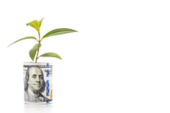 El concepto de planta verde crece en nota de la moneda del dólar de EE. UU. Imagen de archivo libre de regalías