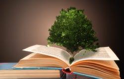 El concepto de un libro o de un árbol del conocimiento con un roble que crece de un libro abierto foto de archivo libre de regalías