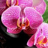 El concepto del balneario de ramita floreciente peló la orquídea violeta Fotos de archivo