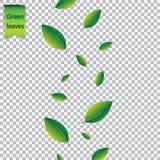 El concepto del verano con verde que vuela deja follaje en el fondo transparente blanco Ilustración del vector Foto de archivo