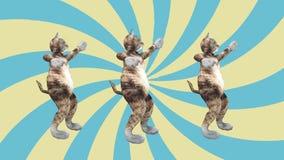 El concepto fresco y el movimiento de baile del estilo del gangnam del gatito del animal dom?stico de la diversi?n al golpe anima