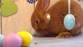 El concepto tradicional del símbolo del conejo de la celebración mullida de pascua cerca adornó la limpieza de la rama metrajes